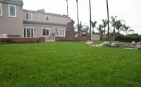 Lawns: Sod and Synthetic Turf